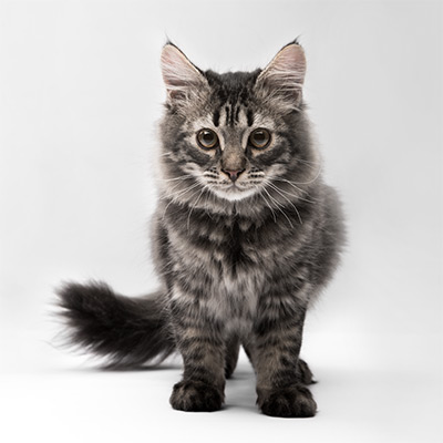 каталог для кошек | Фитобокс