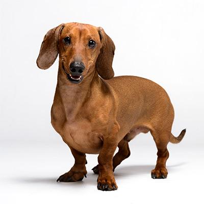 каталог для собак | Фитобокс