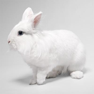 Для кроликов