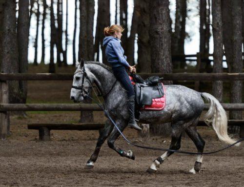 Профилактика сезонных заболеваний у лошадей