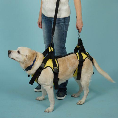 Сборная поддержка для собак