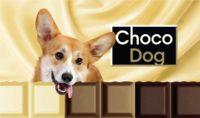 choco-dog-shokolad-dlia-sobak-45-gr-novinka-veda