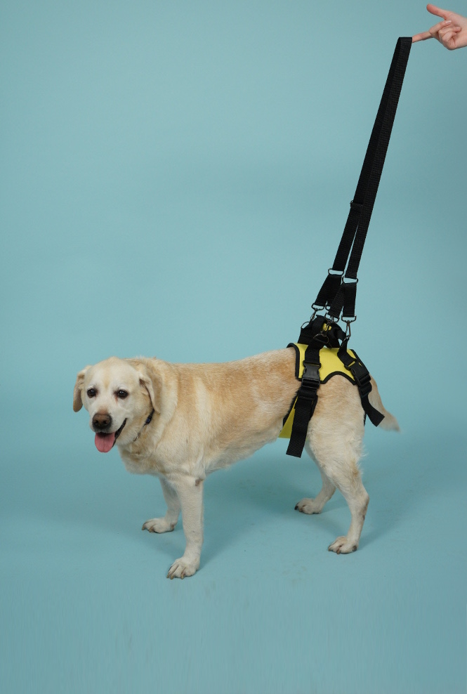 поддержка для собак