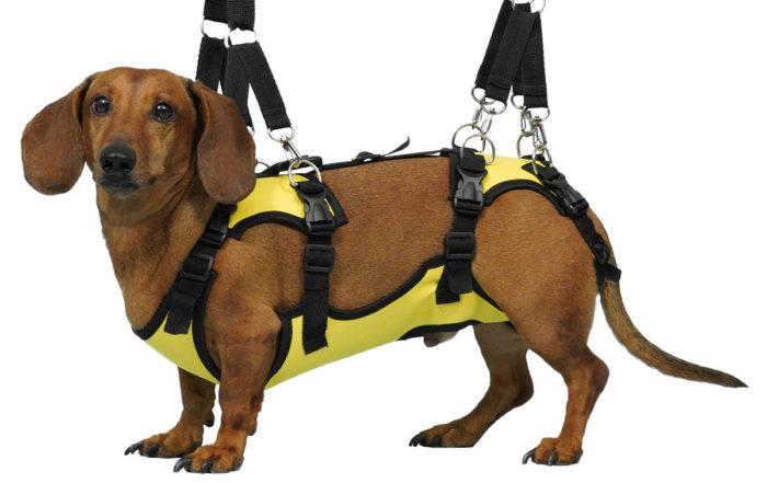 Полная поддержка для маленьких собак