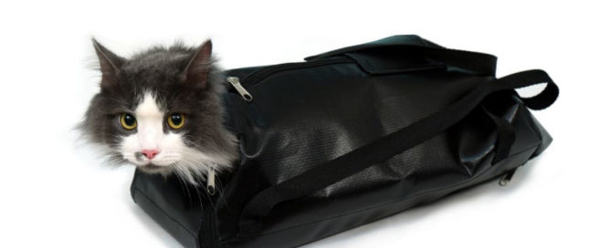 Фиксационная сумка для кошек